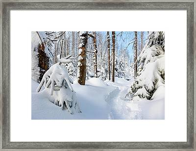 Framed Print featuring the photograph winter path, Harz by Andreas Levi
