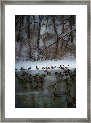 Winter Swim Framed Print
