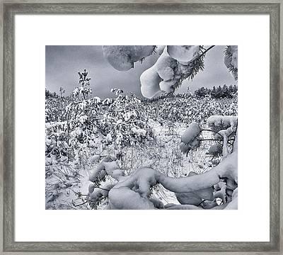 Winter Triumphs. Shchymel, 2018. Framed Print