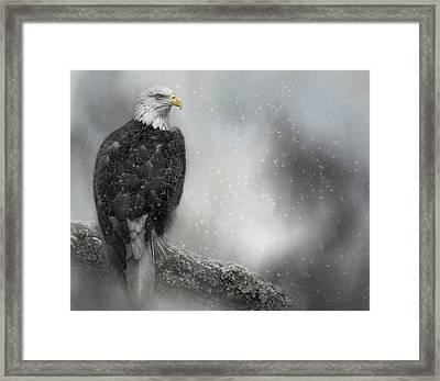 Winter Watcher Framed Print