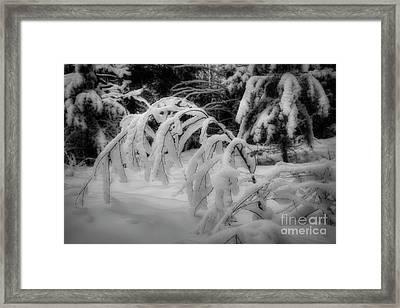 Winterland 8 Framed Print