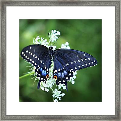 Framed Print featuring the photograph Wonder by Michelle Wermuth