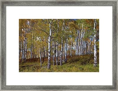 Framed Print featuring the photograph Wonders Of The Wilderness by James BO Insogna