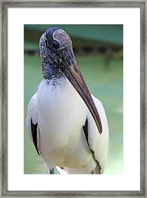 Wood Stork 40312 Framed Print