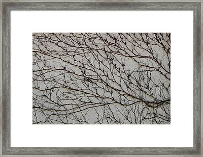 Framed Print featuring the photograph Woodbine by Attila Meszlenyi