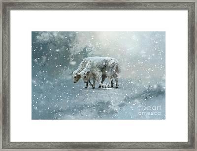 Yaks Calves In A Snowstorm Framed Print