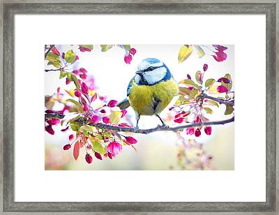 Yellow Blue Bird With Flowers Framed Print