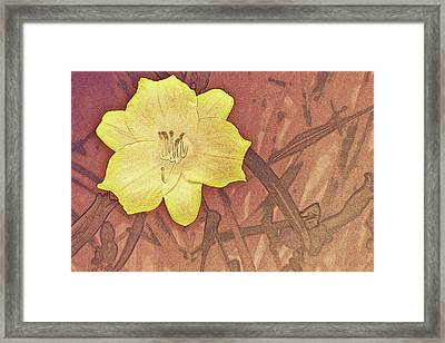 Yellow Day Lily Stencil On Sandstone Framed Print