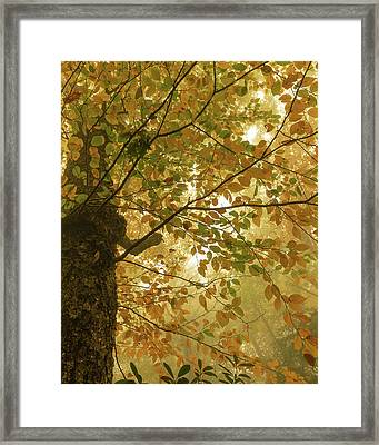 Yellow Fall Leaves - Blue Ridge Parkway Framed Print