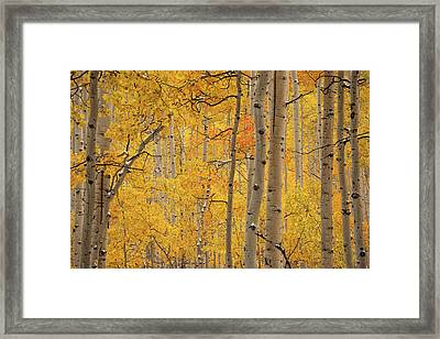 Yellow Forest Framed Print by Leland D Howard