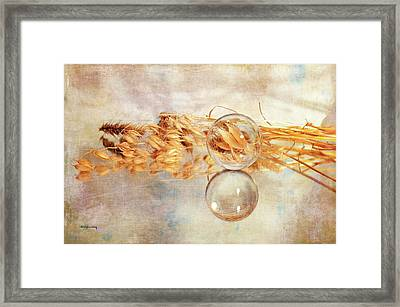 Framed Print featuring the photograph Yesterday's Seeds by Randi Grace Nilsberg