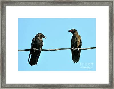 Young Crow Chatting With Mom Framed Print