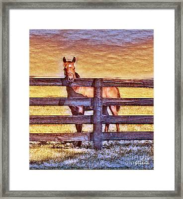 Young Kentucky Thoroughbred Framed Print