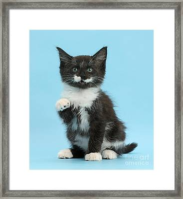 Framed Print featuring the photograph You're The Rat Who Ate My Cornflakes by Warren Photographic