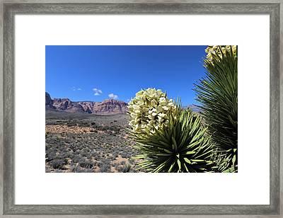 Yucca Brevifolia Framed Print