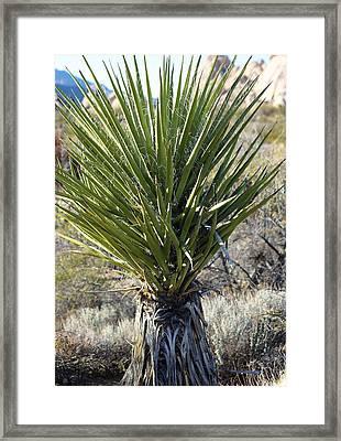 Yucca Framed Print