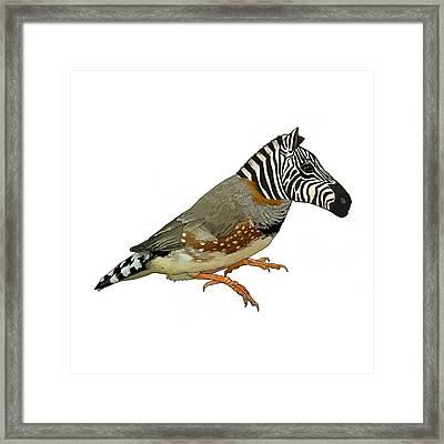 Z Is For Zebra Finch Thats Not A Zebra Finch Framed Print