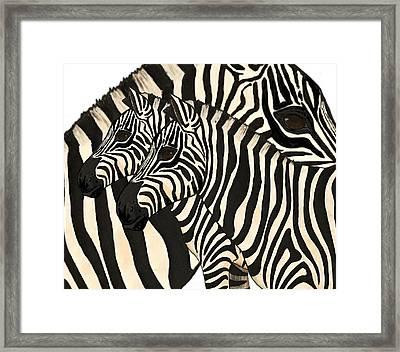 Z Is For Zebras Framed Print