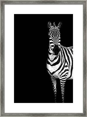 Zebra Drama Framed Print