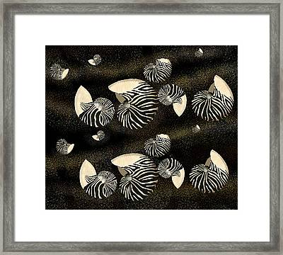 Zebra Pattern Nautilus Shells6 Framed Print