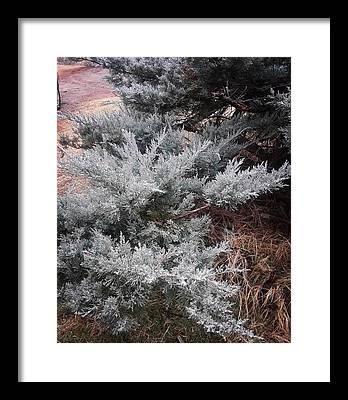 Frost Framed Prints