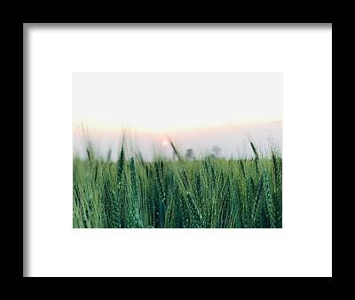 Scenery Framed Prints