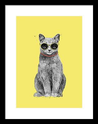 Cool Kitten Framed Prints