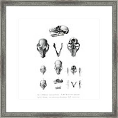 African Mammal Skulls Framed Print by Hugo Troschel