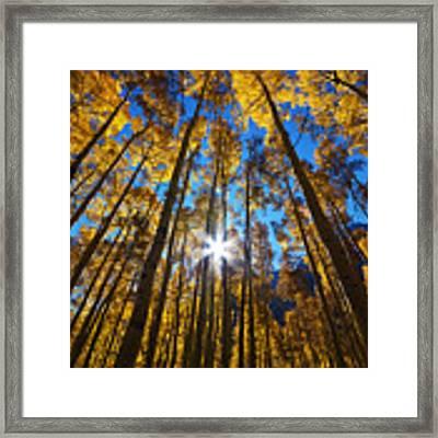 Autumn Aspens Framed Print by Kate Avery