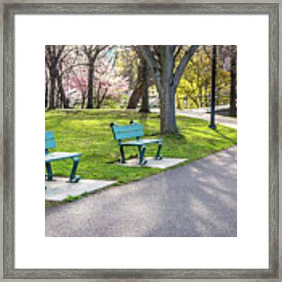 Cherry Blossom Walk Framed Print by Susan Cole Kelly