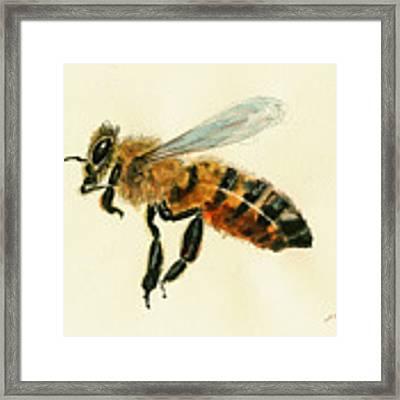 Honey Bee Watercolor Painting Framed Print by Juan  Bosco