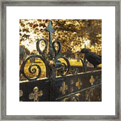 Jackdaw On Church Gates Framed Print