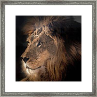 Lion King Of The Jungle Framed Print by James Sage