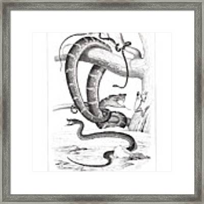 Snakes And Frogs Of Costa Rica Framed Print by T Sinclair