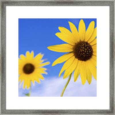 Sunshine Framed Print by Chad Dutson