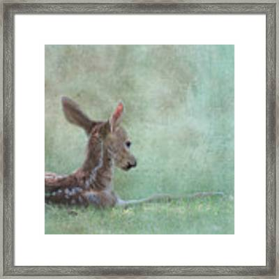 Tranquil Framed Print by Sally Banfill