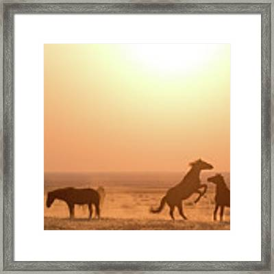 Wild Horse Sunset Framed Print by Wesley Aston
