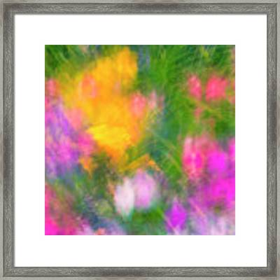 Summer Impression Series Panorama - Flowers Framed Print by Ranjay Mitra