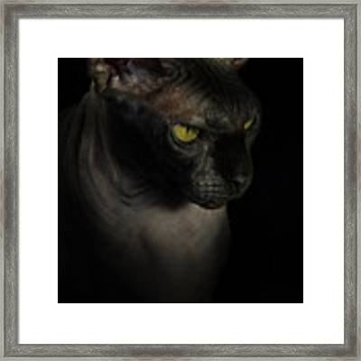 Sphynx Cat Portrait Framed Print by Glenda Wright