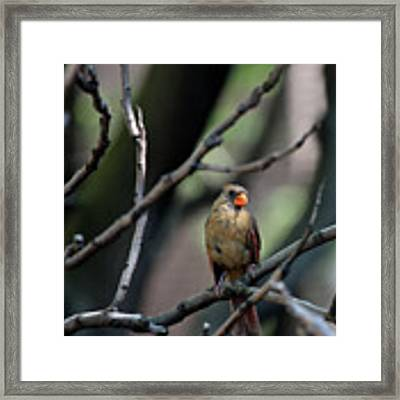A View From The Tree Tops  Framed Print by Patricia Youngquist