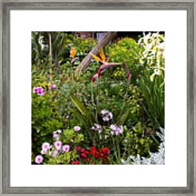 A Riot Of Flowers Framed Print by Lorraine Devon Wilke