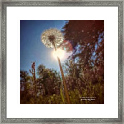 A Shiny Flower Day Framed Print by Stwayne Keubrick