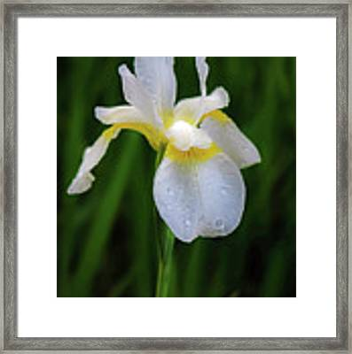 A Simple Purity Framed Print by Kendall McKernon