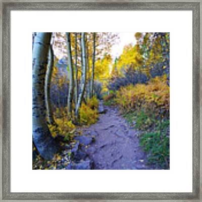 A Walk In The Woods Framed Print by Kate Avery