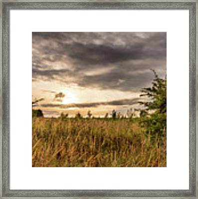Across Golden Grass Framed Print by Nick Bywater