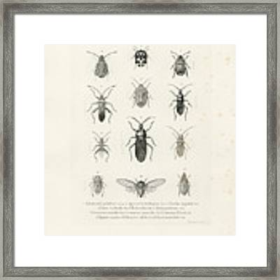 African Bugs And Insects Framed Print by W Wagenschieber