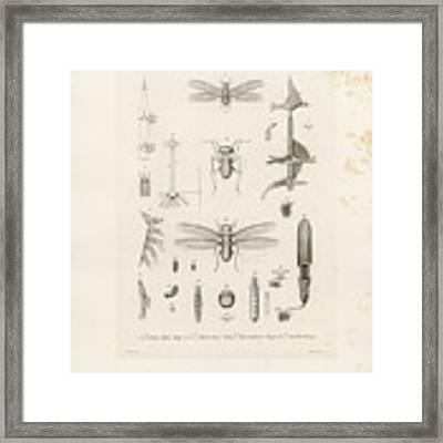 African Termites And Their Anatomy Framed Print by W Wagenschieber