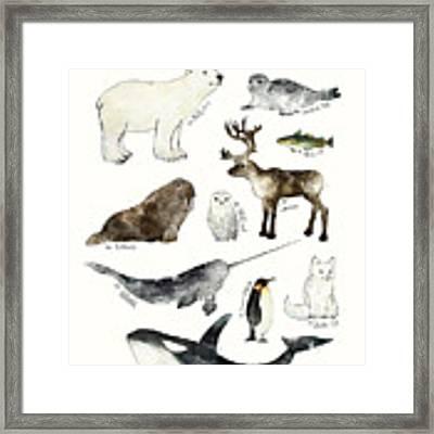 Arctic And Antarctic Animals Framed Print