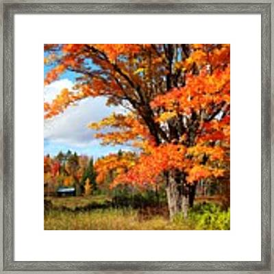 Autumn Glory Framed Print by Gigi Dequanne