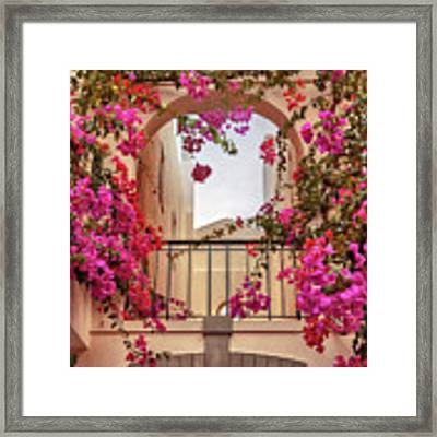 autumn plants and garden in Portugal Algarve Framed Print by Ariadna De Raadt
